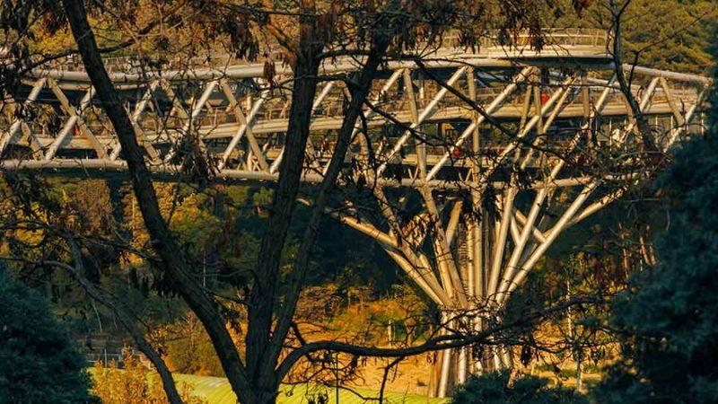 حداقل مداخله در طبیعت در هنگام ساخت پل طبیعت